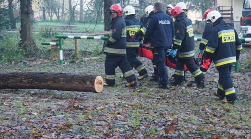 Drzewo przygniotło mężczyznę. Pogotowie zabrało go do szpitala