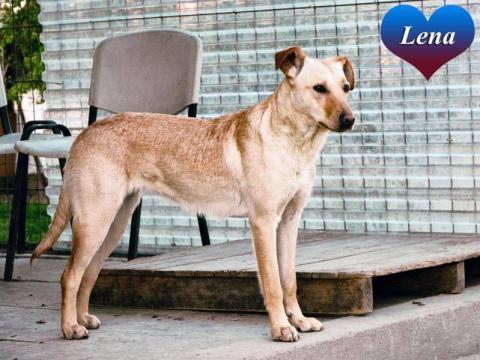 Lena czeka na adopcję