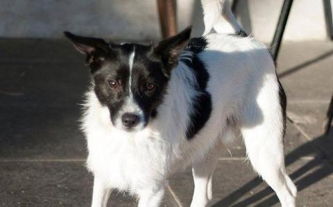 pies do adopcji
