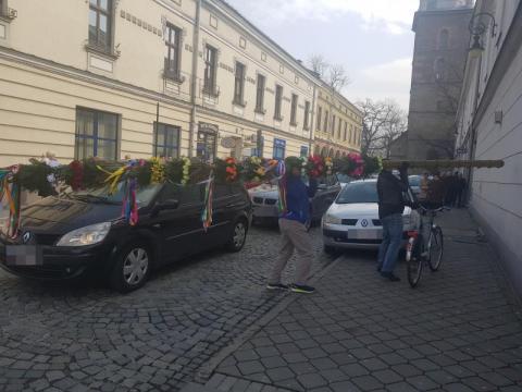 Palmy Szkaradków z Rdziostowa, fot. Iga Michalec
