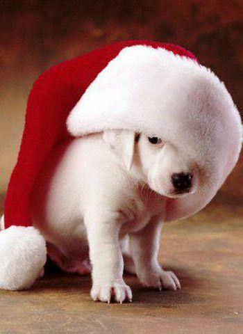 Stary Sącz: psiaki ze schroniska też czekają na św. Mikołaja. Dołącz do akcji!