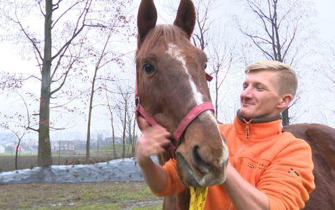 Koń Bayer z opiekunem