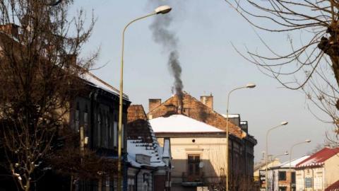 Zakup roślin doniczkowych, które pochłaniają smog! Takie propozycje wpływają do Urzędu Miasta