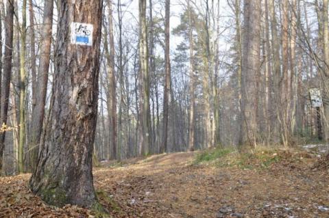 Tymbark: Wyszedł na grzyby do lasu i już z niego nie wrócił. Co tam się stało?