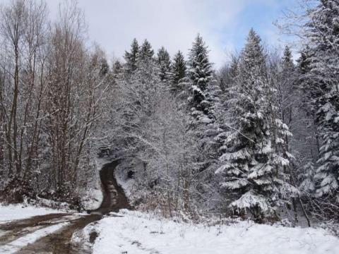 Zima w Nadleśnictwie Nawojowa, fot. Iga Michalec