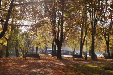 Trudno uwierzyć, że to listopad. Na jak długo wróciła złota polska jesień?