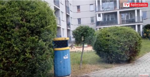 Nowy Sącz: kot robi z piaskownicy kuwetę, za chwilę wejdą tu dzieci [WIDEO]