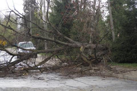 Drzewo przewróciło się na linie energetyczne. Droga jest nieprzejezdna