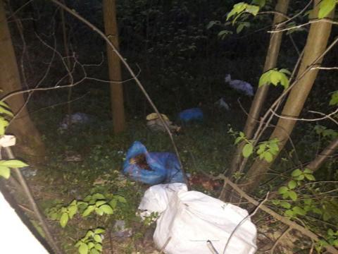 Ktoś wyrzucił martwe kury przy drodze w Korzennej
