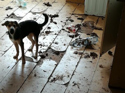 Psy z mieszkania eksmitowali, fekalia zostały jeszcze na kolejne trzy dni…