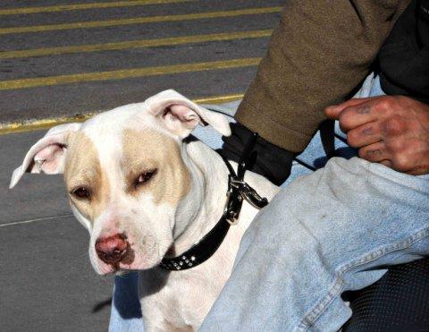 Agresywny Burek kontra gaz pieprzowy? Lepiej żebyś miał świadka, że pies na Ciebie napadł!