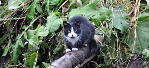 Limanowscy strażacy walczyli o życie kota. Zwierze miało szczęście