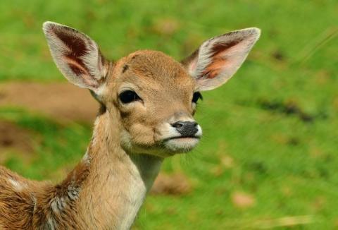 Wypadki z udziałem dzikich zwierząt