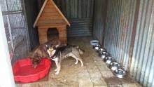 psy ze schroniska w Krynicy