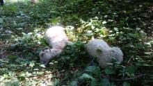 Muszyna: Wysypisko owiec koło ujęcia wody! Skandal zakończy się w sądzie