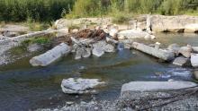 Rzeka Kamienica w Nawojowej
