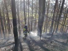 Kilkudziesięciu strażaków gasi pożar. Płonie las w Kamionce Małej
