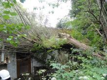 Drzewo przewróciło się na dom w Łososinie