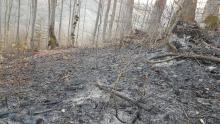 Płoną lasy na Sądecczyźnie. Strażacy mają pełne ręce roboty