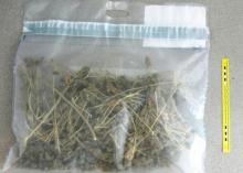 Uprawiał marihuanę na poddaszu. Grozi mu 10 lat więzienia