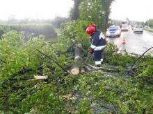 Burza przeszła nad Sądecczyzną. Powalone drzewa, zerwane linie energetyczne