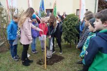 sadzenie sosny Fundacja Sądecka