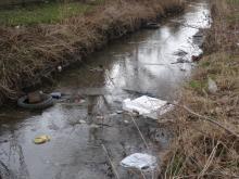 Potok Żeglarka - bagienka