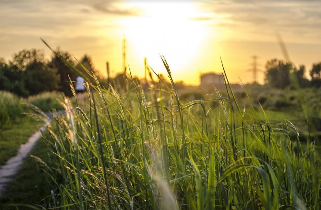miasto trawa Pixabay