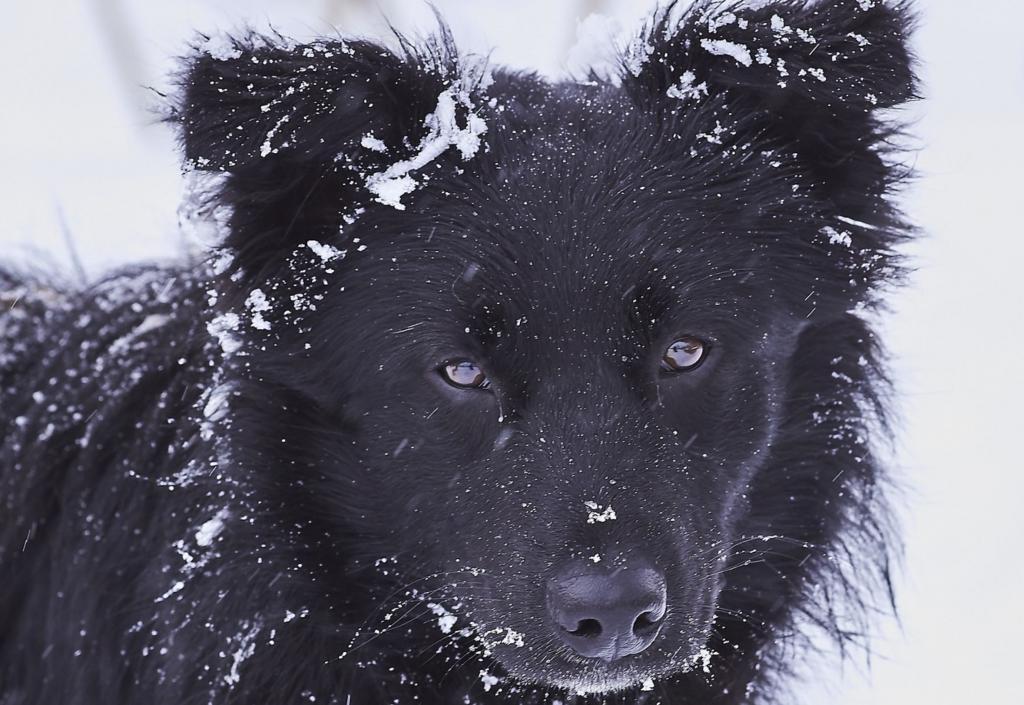 Pies na mrozie. Fot. Pixabay