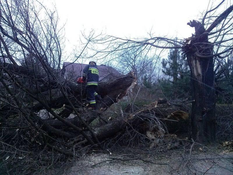halny szaleje. połamane drzewa, zerwane linie energetyczne