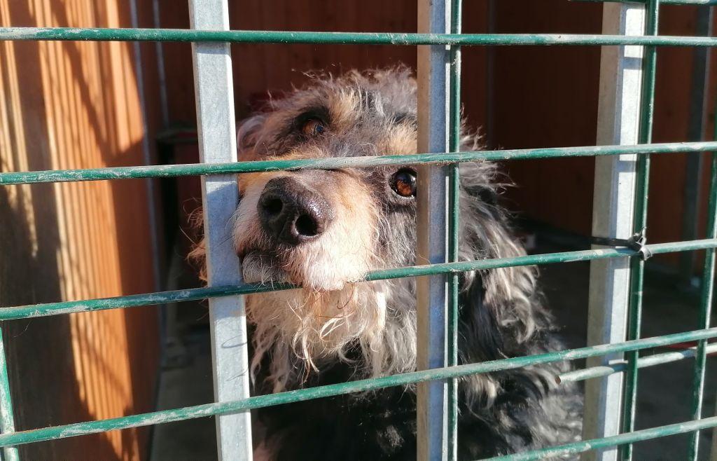 Nie kupuj, adoptuj, pomagaj!