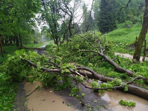 Gwałtowna burza przeszła nad regionem. Podtopione budynki, połamane drzewa