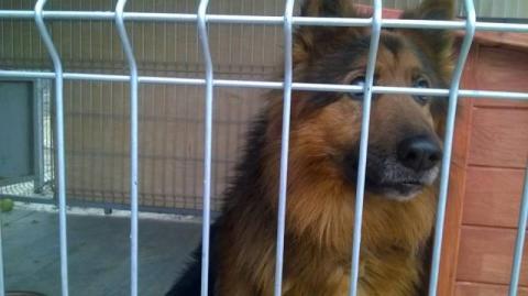 Okno życia dla psów? Kij ma dwa końce – mówią sceptycy