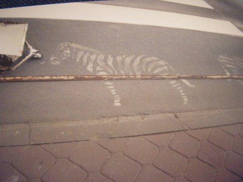 """Nowy Sącz: Zebry na """"zebrze"""", czy nie szkoda, że zamalowane?"""