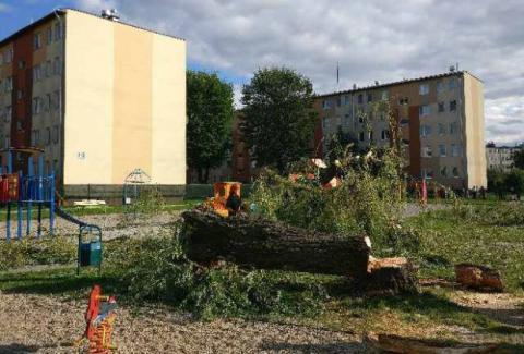 Millenium/Nowy Sącz: Drzewo runęło na dziewczynkę bawiącą się na placu zabaw