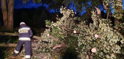 Wichura zebrała żniwo. Połamane drzewa, zerwane linie i uszkodzone dachy