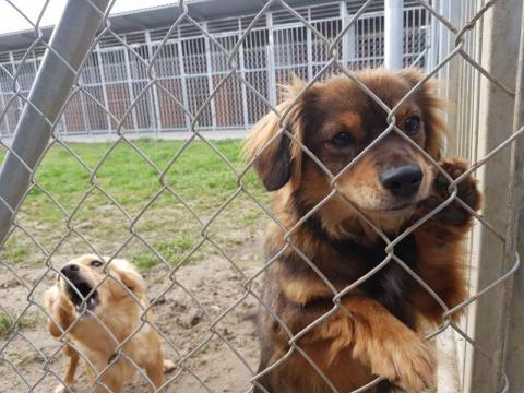schronisko dla bezdomnych zwierząt, fot. Iga Michalec