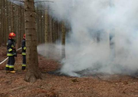 Pożar w lesie. Paliła się ściółka i suche gałęzie