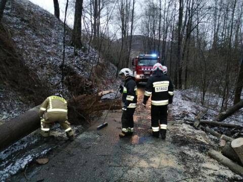 Było bardzo niebezpiecznie. Strażacy usuwają z dróg połamane drzewa