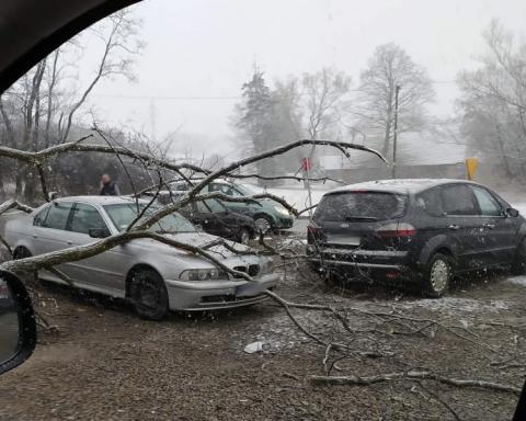 W Korzennej omal nie doszło do tragedii. Drzewo przewróciło się na BMW