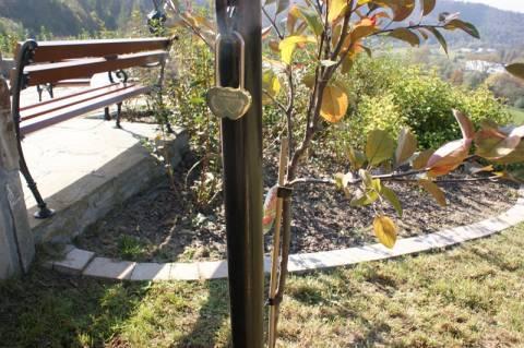 Drzewko miłości w ogrodach sensorycznych