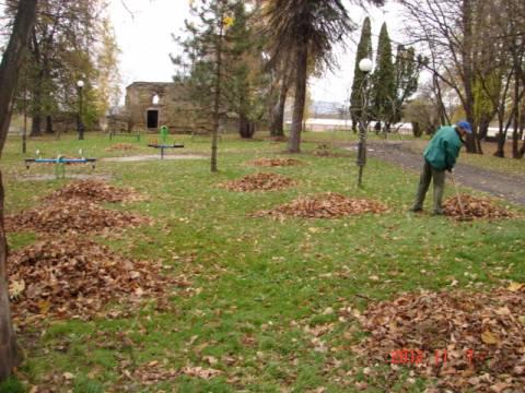 Nowy Sącz: Do końca 2017 roku liści w listopadzie wywozić nie będą