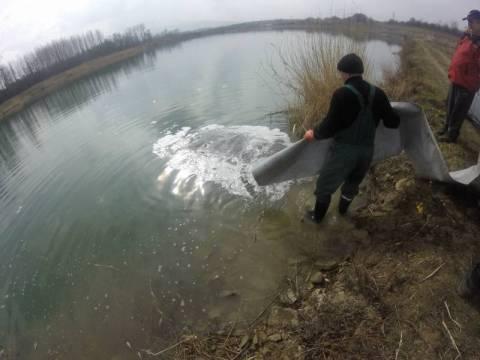 Stary Sącz: Wiadomość dla wędkarzy - do stawów trafiła ponad tona ryb!