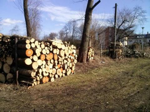 Mądry Polak po szkodzie, po ostatnich pogromach wycięcie drzewa znów trzeba zgłosić