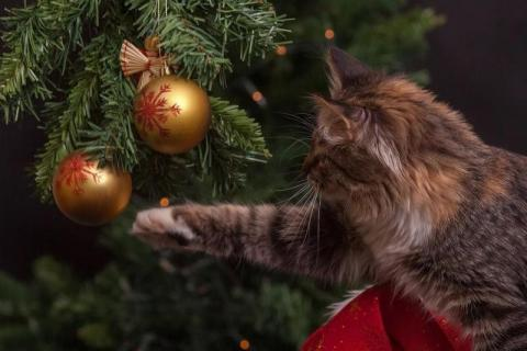 Rozdajemy świąteczne drzewka z Nadleśnictwem Stary Sacz!
