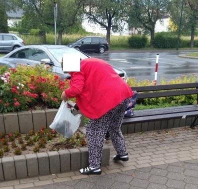 Nowy Sącz: No i kradną nam nawet nasze kwiatki z klombów! [ZDJĘCIA]
