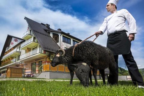 restauracja Czarna Owca