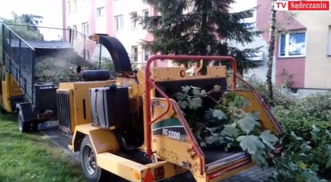 Trwa vendetta na drzewach, które zagrażały mieszkańcom Millenium [WIDEO]