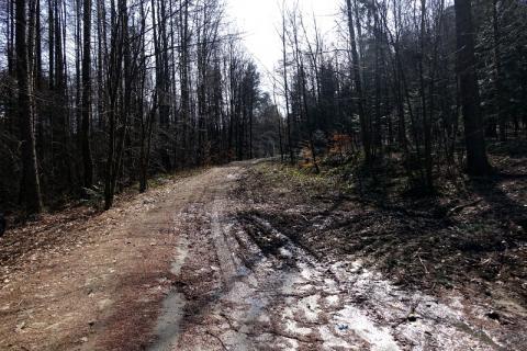 Spędził noc w lesie, bo jego samochód ugrzązł w błocie