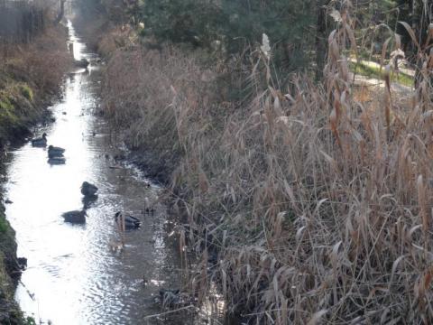 Potok Żeglarska czeka na odmulenie